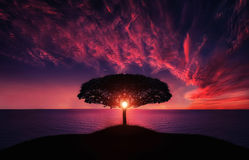 Tree in sunset. Lonely tree, landscape lake, trees Stock Photo