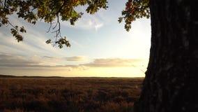 Tree sunset panning green sky. Video of tree sunset panning green sky stock video footage