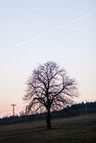 Tree in sunset Stock Images