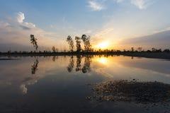 Tree  sunset reflection Stock Image
