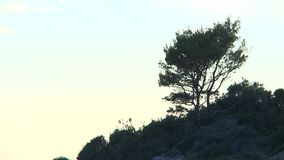 Tree on sunset in rocks of Montenegro. Yellow sky clouds stock video