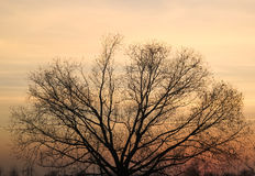The tree in the sunset Royalty Free Stock Photo