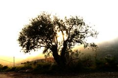 Tree at sunset. A silhouette tree and sun rays Royalty Free Stock Photo