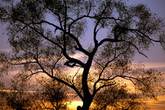 Tree Sunset Silhouettes Royalty Free Stock Image