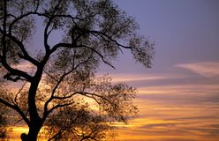 Tree Sunset Silhouettes Stock Photography