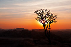 Tree in the sunset sky Stock Photos