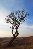 Tree in the sunset sky Royalty Free Stock Image