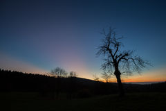 Tree in sunset sky royalty free stock image