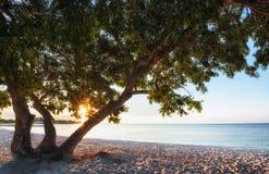 Tree on a sandy beach. Stock Photo