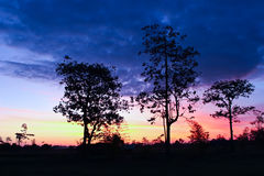 Tree at sunset. Style image Royalty Free Stock Images