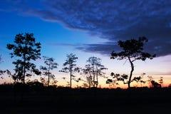 Tree at sunset. Style image Stock Image