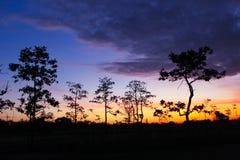 Tree at sunset. Style image Royalty Free Stock Photo