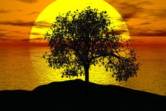 Tree, Sunset, Sun, Landscape Royalty Free Stock Image