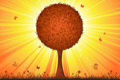 Tree at sunset. Sunshine background for your design Stock Photo