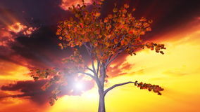 Tree and sunset time lapse clouds, stock footage. Video stock video