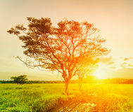 A tree at sunset time. Summer landscape Royalty Free Stock Photo