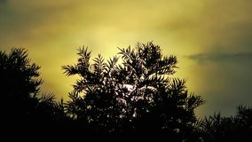 The Tree and the Sunset. Video stock video