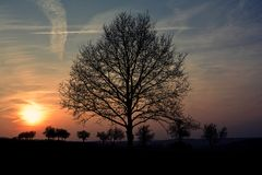 Tree in the sunset at the village Royalty Free Stock Image