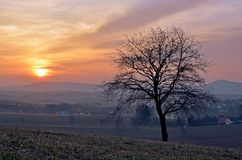 Tree in the sunset at the village Royalty Free Stock Photo