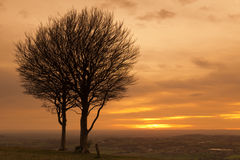 Tree at sunset Royalty Free Stock Image