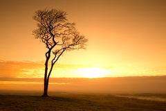 Tree at sunset Royalty Free Stock Photography