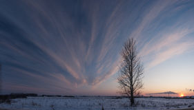A tree and a sunset in winter Stock Image