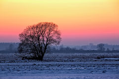 Tree at sunset in winter Royalty Free Stock Image