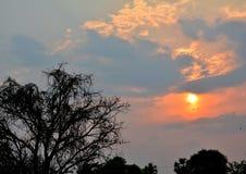 Tree sunset Royalty Free Stock Photo