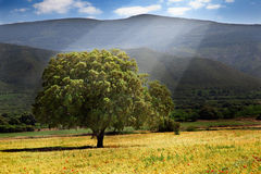 Tree and sunshine. Landscape with tree and sunshine stock photography