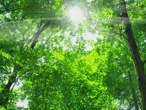 Tree and Sunshine Stock Photos