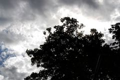Tree. Sunshine clouds awesome Stock Photos