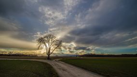Tree sunshine clouds timelapse. Tree with sunshine and clouds timelapse stock footage