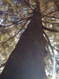 Tree. Sunshine garden Stock Photo