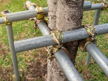 Tree Supporter. Bracing and Protecting The Trees with The Steel Pipes Stock Image