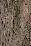 Tree surface. Background of the tree surface Royalty Free Stock Photo