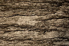 Tree. Surface of the tree trunk Royalty Free Stock Photos