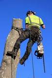 A tree surgeon Stock Photos
