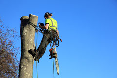 A tree surgeon Stock Photography