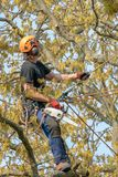 Tree Surgeon with a chain saw royalty free stock photos
