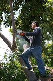 Tree surgeon with chainsaw stock photos