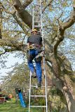 Tree Surgeon climbing a ladder stock photography
