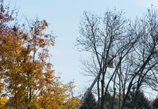 Tree surgeon cutting dead branches from tree Royalty Free Stock Photography