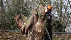 Tree surgeon stock footage