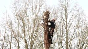 Tree surgeon stock video footage
