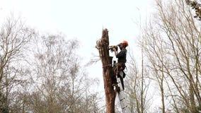 Tree surgeon stock video