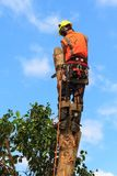 A tree surgeon cutting down a tree stock photo