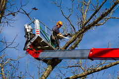 Tree surgeon. Professional arborist in cherry-picker bucket doing end of year cleanup work, trimming and pruning tree Stock Images