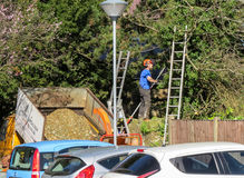 Tree surgeon pruning branches in a car park. Royalty Free Stock Photo