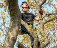Tree Surgeon roped to a tree royalty free stock photo