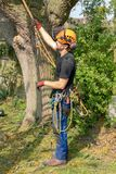 Tree Surgeon with safety harness and ropes stock images